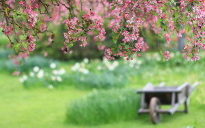 6966197-garden-spring-blooms