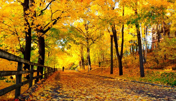 autumn garden, apco garden design