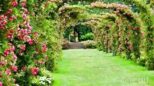 summer garden, Apco Garden Design, Dublin