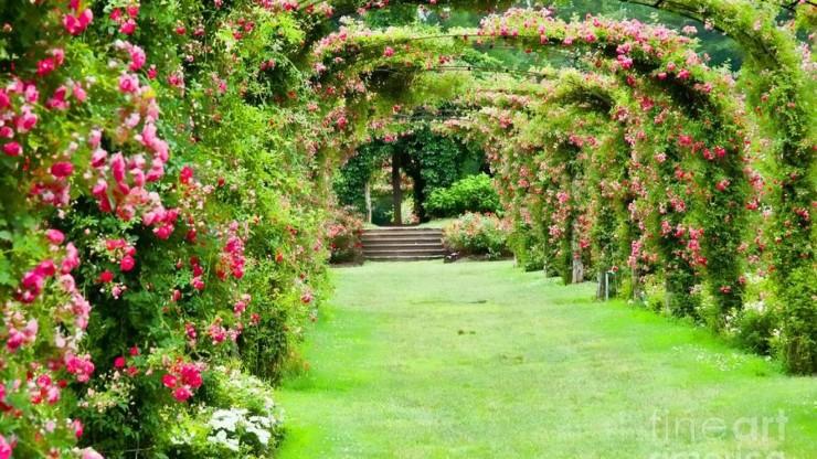 summer garden tips, Apco Garden Design, Dublin